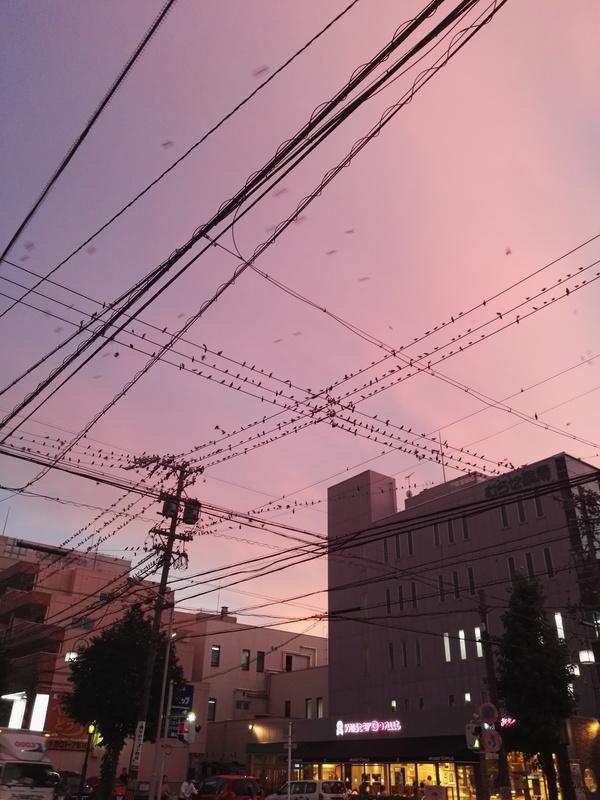 鳥が多すぎ